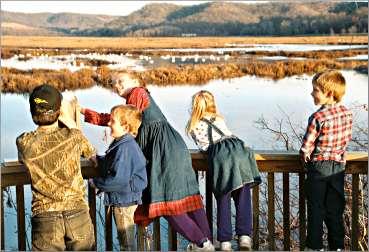 Children look at tundra swans near Alma.