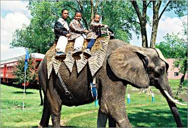 Boys ride an elephant at Circus World.