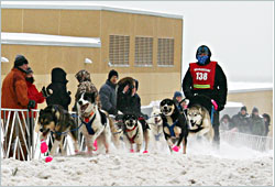 A mid-distance musher starts the race.