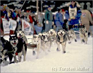 Sled dog team at start of Beargrease Sled Dog Marathon