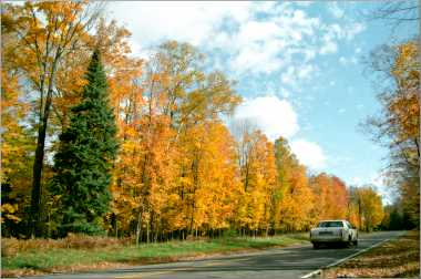 Fall color along a road near Cable.