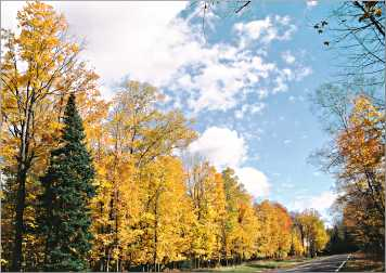 Fall color along County Road D in Cable.