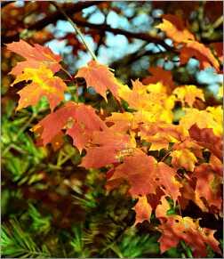 Vivid fall leaves in Door County.