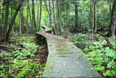 A boardwalk in Logan Creek.