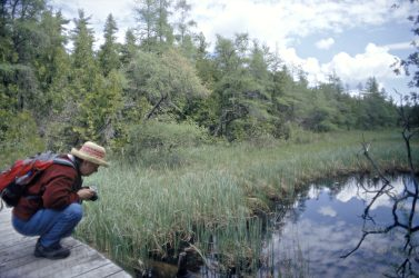 At Ridges Sanctuary, a visitor examines a bog flower.