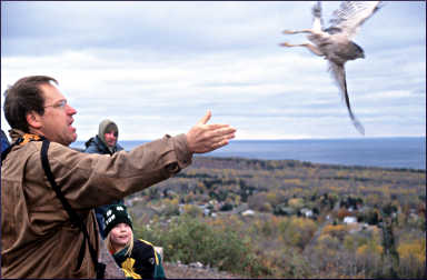 Releasing a hawk in Duluth.