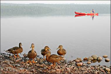 Ducks on Marie Louise Lake Campground.
