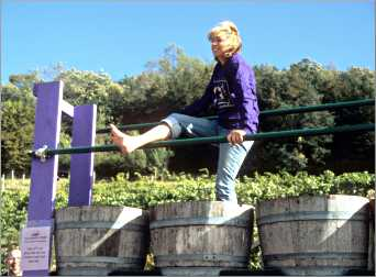 A grape-stomp contestant in a barrel.