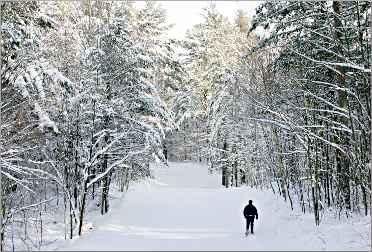 Hayward's Birkie Trail.