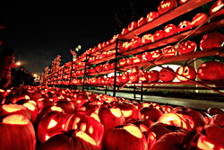 A wall of jack-o-lanterns in Highwood.