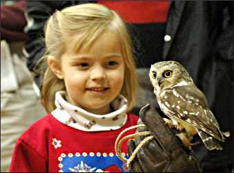 A saw whet owl with a girl.