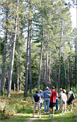 Hikers gather around a naturalist at Itasca.