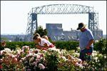 Rose Garden in Duluth.