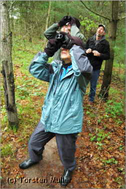 Birders looking up with binoculars