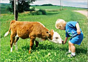 A boy feeds grass to a calf in Wisconsin.