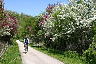 A bicyclist pedals on the Root River State Trail.