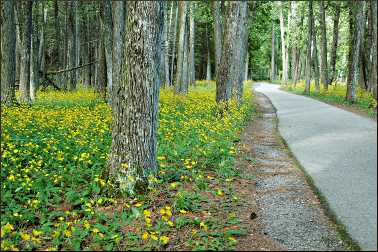 A bike path on Mackinac Island.