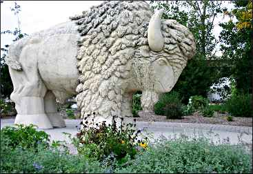 The buffalo in Reconciliation Park.