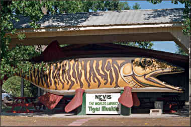The giant muskie in Nevis.