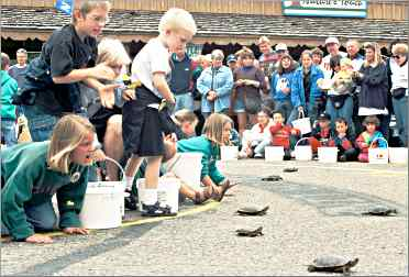 Children urge on turtles at Nisswa's weekly race.