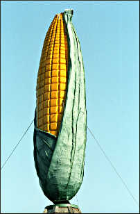 A fiberglass cob of corn.