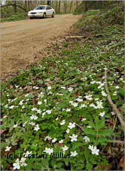 Wildflowers along a Rustic Road 51 near Maiden Rock.