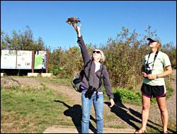 Releasing a sharp-shinned hawk.