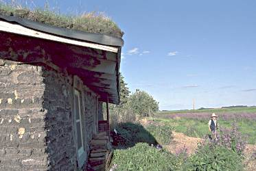 A sod house on the western minnesota prairie attracts curiou