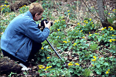 Photographing wildflowers.